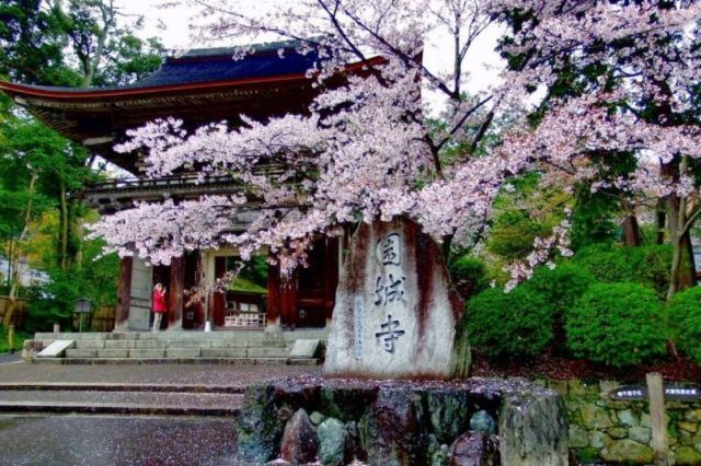 滋賀県の桜の名所の三井寺