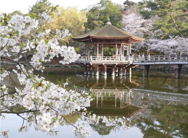 奈良 浮見堂周辺の桜と池