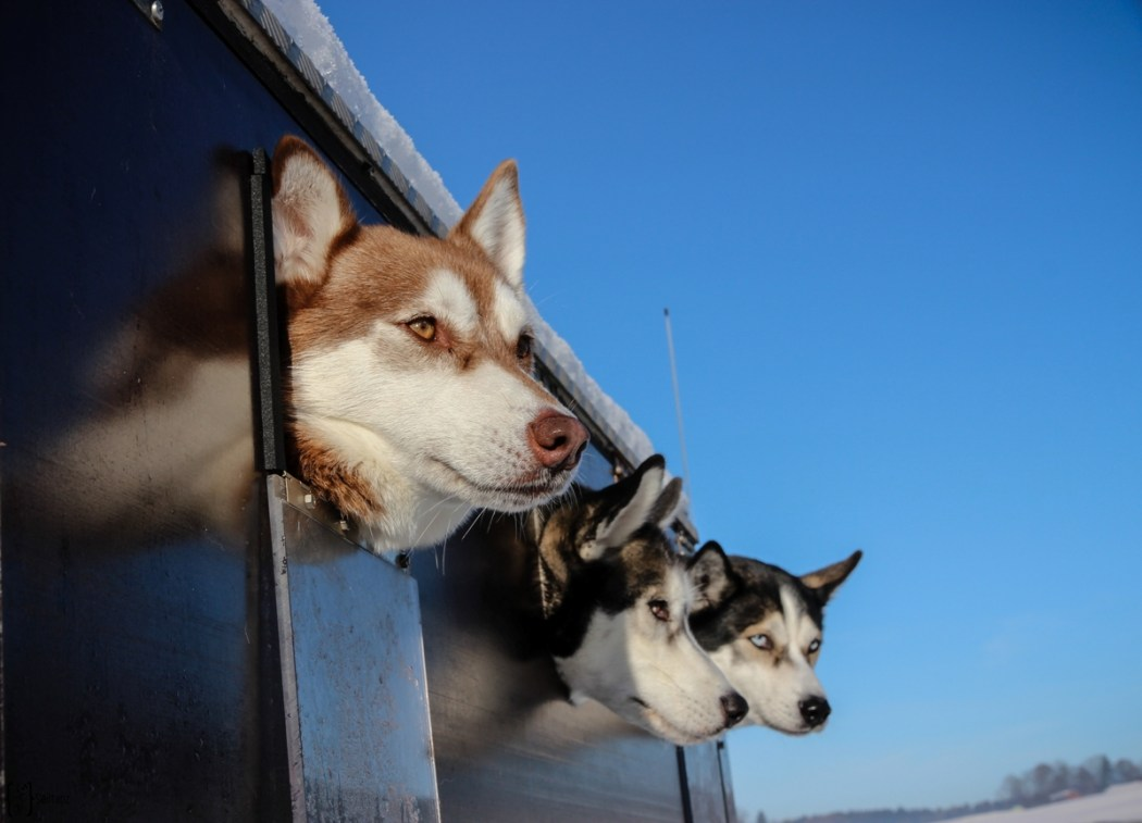 1 Husky Transport