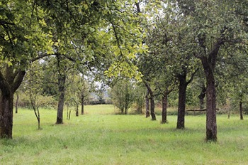 NaturSpaziergang2