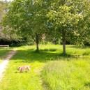 sunny walks