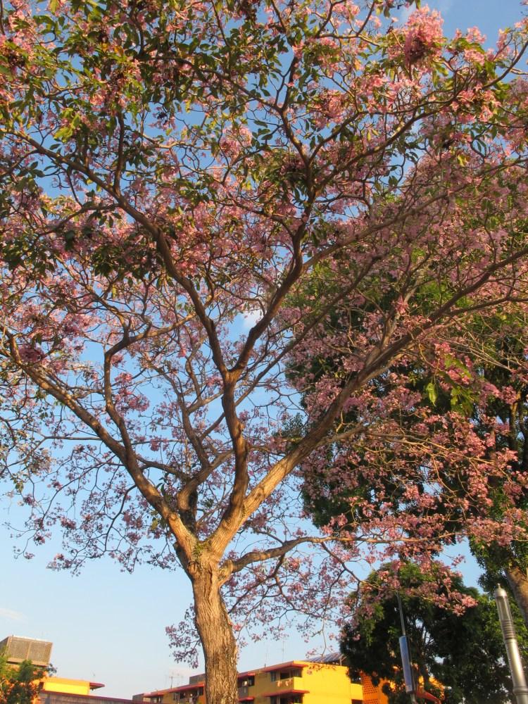 Spring of Sakura (1/4)