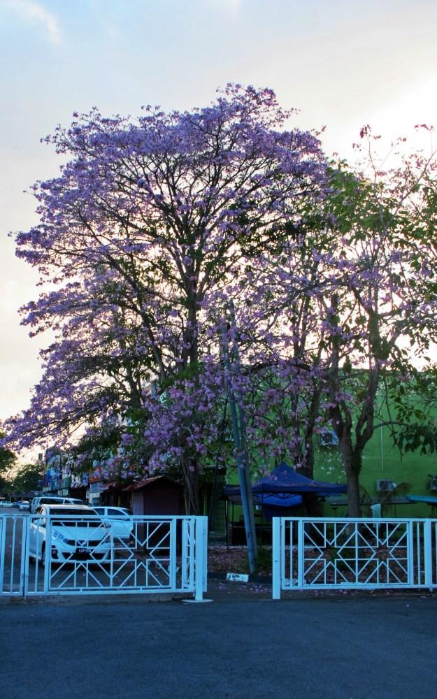 Spring of Sakura (3/4)