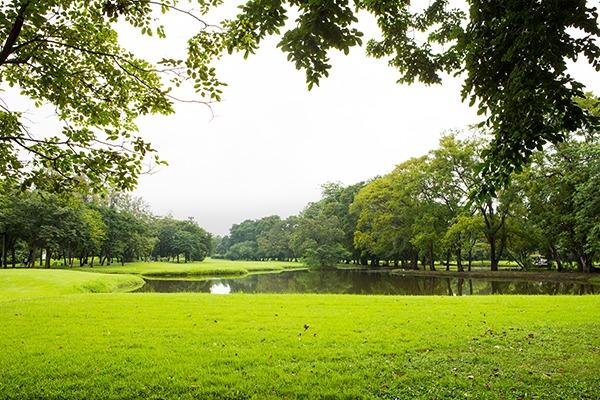 banho-floresta-2 Banho de floresta: como funciona a prática japonesa contra o estresse e ansiedade