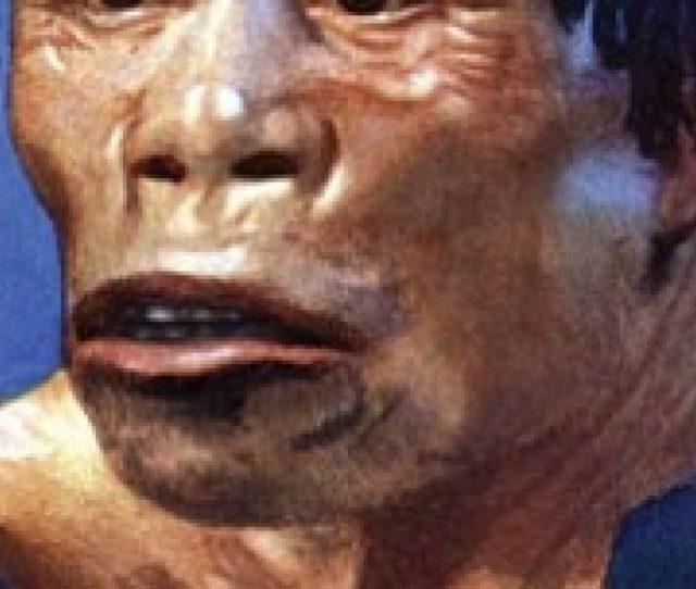 Ciri Ciri Homo Robustus Serta Penemuannya Sejarah Lengkap