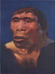 Jenis Jenis Manusia Purba Dan Penjelasannya : jenis, manusia, purba, penjelasannya, Jenis, Manusia, Purba, Pithecanthropus, Ciri-Cirinya, Sejarah, Lengkap