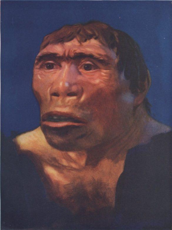 Manusia Purba Pithecanthropus Mojokertensis : manusia, purba, pithecanthropus, mojokertensis, Jenis, Manusia, Purba, Pithecanthropus, Ciri-Cirinya, Sejarah, Lengkap