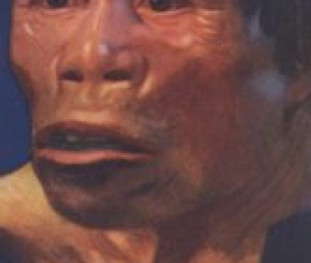 Jenis Manusia Purba Pithecanthropus Dan Ciri Cirinya Sejarah