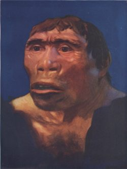 Ciri-ciri Pithecanthropus Erectus : ciri-ciri, pithecanthropus, erectus, Jenis, Manusia, Purba, Pithecanthropus, Ciri-Cirinya, Sejarah, Lengkap