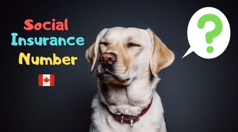 SINナンバー、Social InsuranceNumber、カナダ、取得方法、更新、必要書類