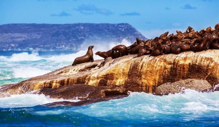数千頭のアザラシが生息するドイカー島。港から船に乗り込み10分程度で行ける島。近づくとぷーんとくさい臭いが漂ってくる