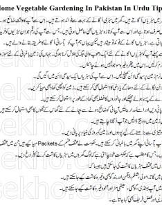 Home vegetable gardening in pakistan urdu tipg also tips rh sekho