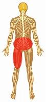 腰痛,左大腿の痛み