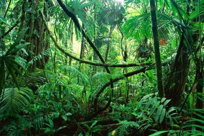 Contoh Kliping Flora Fauna