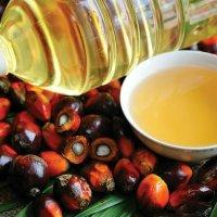 Cała prawda o oleju palmowym