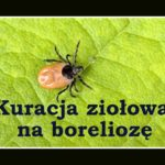 Borelioza skuteczne leczenie ziołami – protokół podstawowy Buhnera