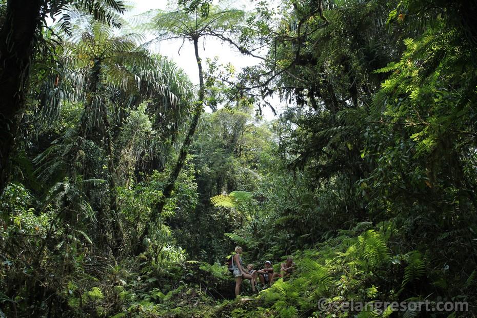 Stromové kapradiny