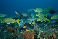 Potápění na Bali - život pod vodou před Selang resort