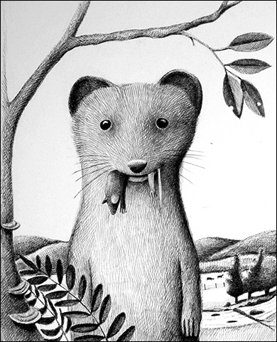 Weasel, Anne Hunter, Illustrator