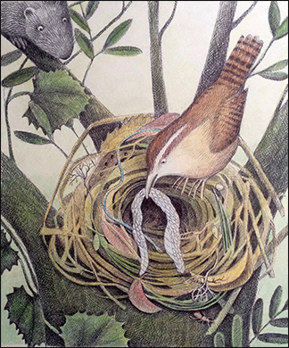 Bird with Snakeskin, Anne Hunter, Illustrator