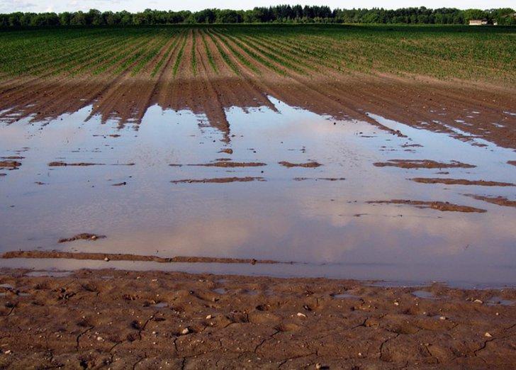 Ein verdichtetes Feld auf dem Wasser steht
