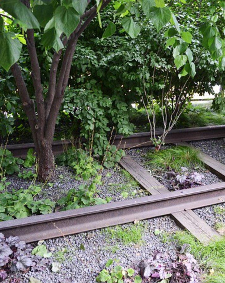 Pflanzen wachsen zwischen alten Eisenbahnschienen