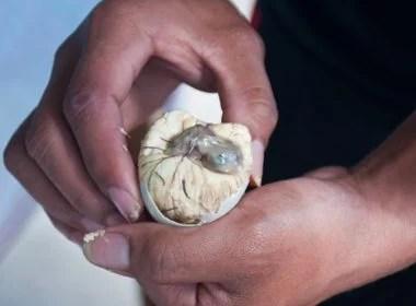 Balut - Phillipines
