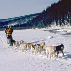 10. Course de Huskies à Anchorage, en Alaska