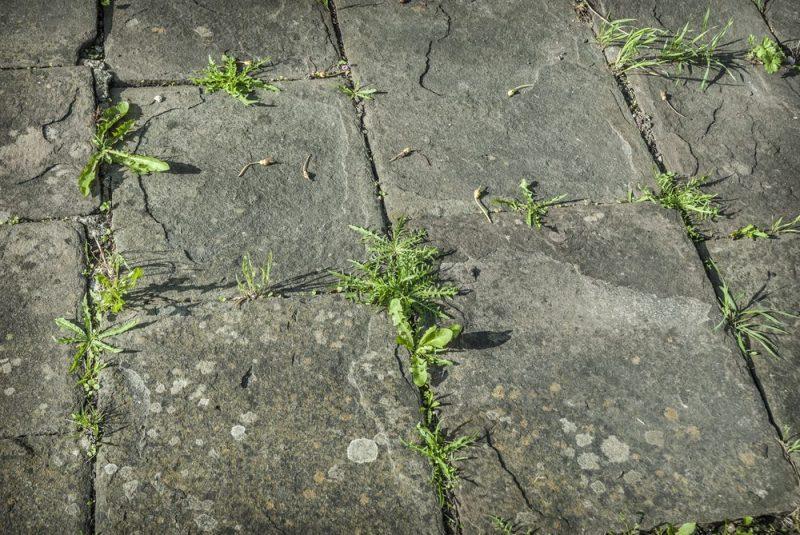 2. Éliminez les mauvaises herbes des fissures avec du vinaigre et du sel
