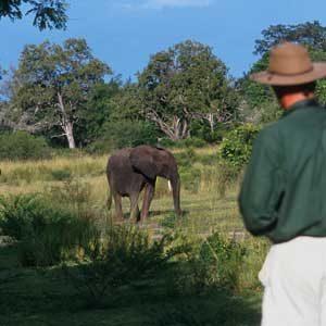 9. Safari en Tanzanie