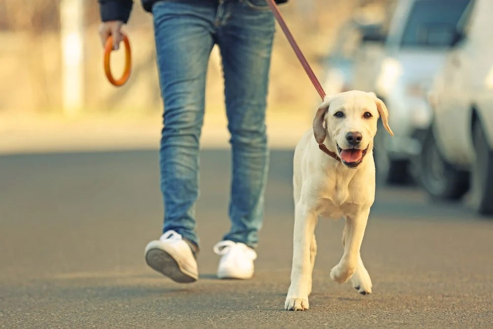 Superstitions: la crotte de chien signe de chance