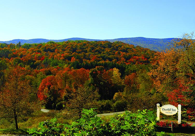 Deerhill treetops Fall