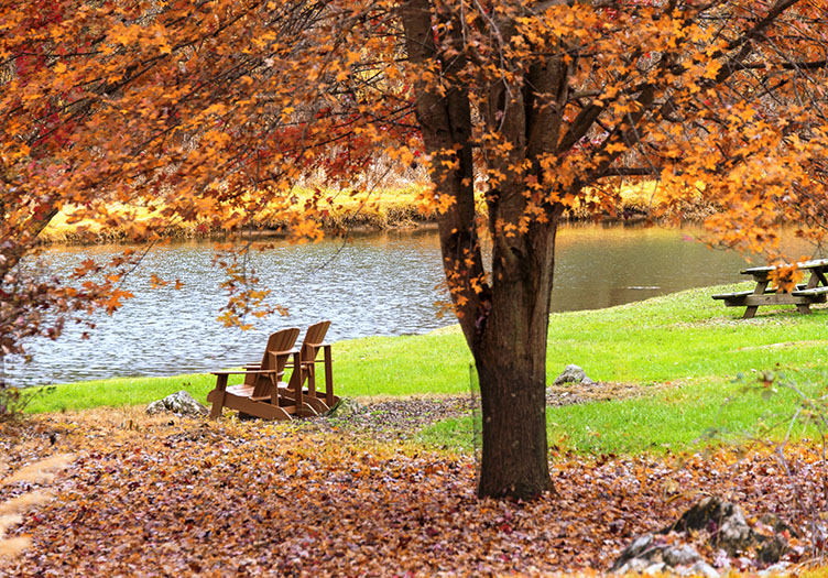 Beautiful tree in the autumn with orange leaves surrounded by fallen leaves, two adirondack chairs, green grass and a lake in the fall with