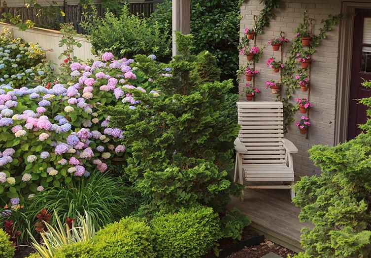hydrangea-house-garden