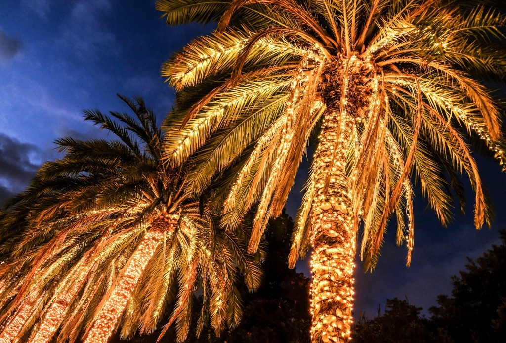 christmas lights on palm trees during christmas in florida