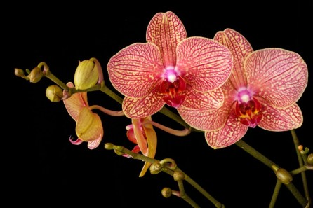 Orchid Flower Background 10