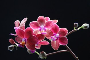 Orchid Flower Background 17