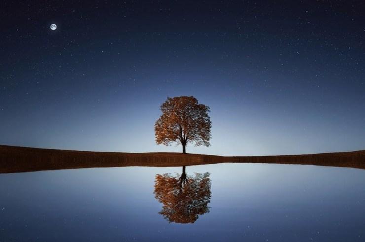 mirror principle in nature