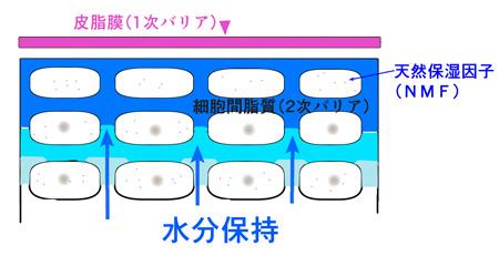 肌の水分保持の説明画像
