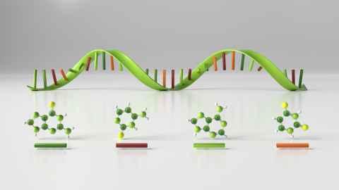 Nucleotides in DNA