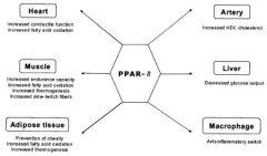 PPAR Delta: Burn Fat & Become an Endurance Athlete