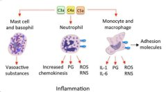 Intro to C4A (Complement Component 4 A) & Its Role in CFS, Mold, Histamine Intolerance