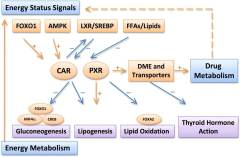 Negative Reactions to Supplements or Drugs? You Might Have Low CAR (Constitutive Androstane Receptor)