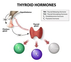 4 Reasons Why Taking Thyroid Hormones May Be a Bad Idea