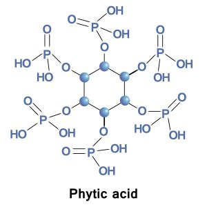 Phytic acid is a saturated cyclic acid, is the principal storage form of phosphorus in many plant tissues, especially bran and seeds. It can be found in cereals and grains.