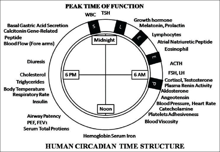 the circadian rhythm effect Disruption of circadian rhythms affects both brain and body, mouse study finds date: october 28, 2009 source: society for neuroscience summary: a new study has found that chronic disruption of one.