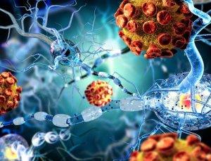 Anticancer effects of artemisinin