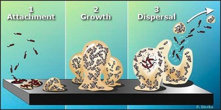 r2003_PSTO_BFIN3STEPS.feature blurb