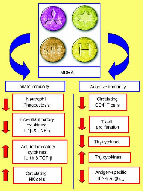 4 Surprising Benefits of Ecstacy (MDMA) and 5 Dangerous Side ...