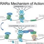 retinoic-acid-receptor-alpha-5-638